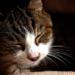 猫のうんち対策法におすすめ!「木酢液」の効果を試してみた!